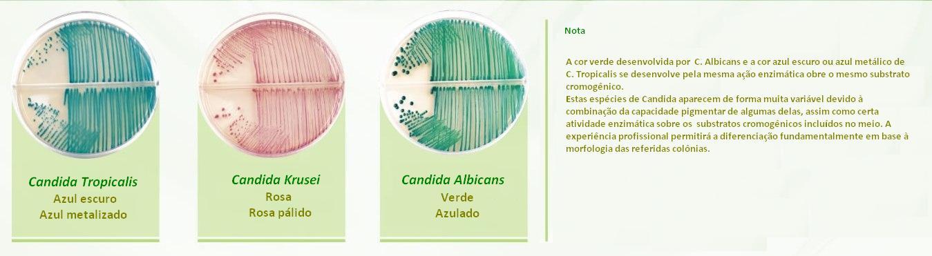 cartaz_referencia candida